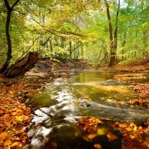 Leśna wyprawa