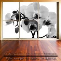 Storczykowiec - dekoracja na szafę