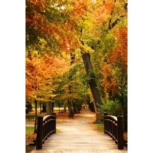 Fototapeta Jesień w parku