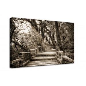 Obraz most drzewa - 10021