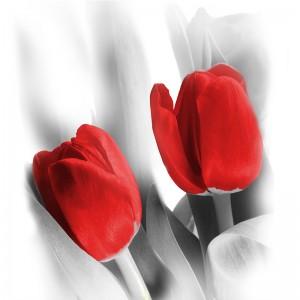 Fototapeta kwiaty - czerwone tulipany