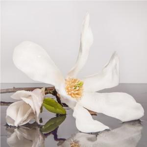 Fototapeta kwiat magnolii do sypialni