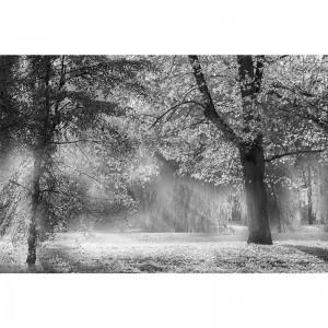 Fototapeta drzewa we mgle - czarno biała