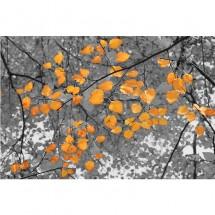 Fototapeta liście - Jesień