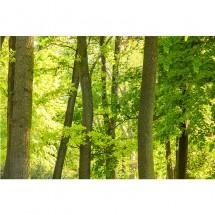 Fototapeta drzewa liście do sypialni