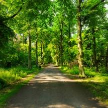 Fototapeta ścieżka w lesie