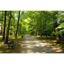 Fototapeta ławeczka w parku