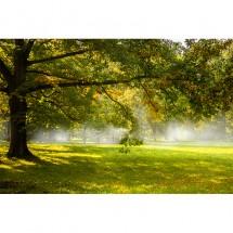 Fototapeta drzewa we mgle