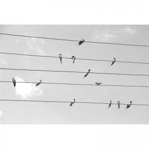 Fototapeta ptaki na drucie winylowa na fizelinie