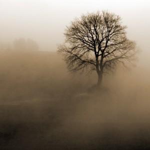 Fototapeta drzewo mgła do sypialni