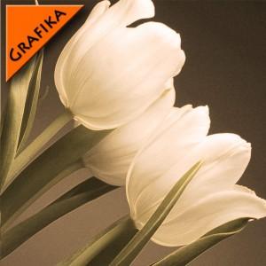 Fototapeta kremowy w tulipanach