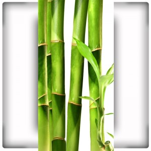 Fototapeta Bambusy na wąską ścianę