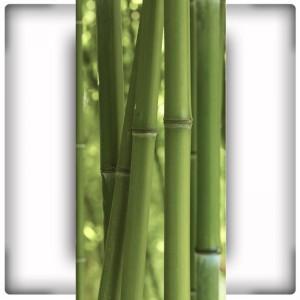 Bambusy IV