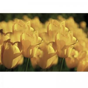Tulipanowe pole