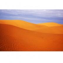 Kwiat pustyni