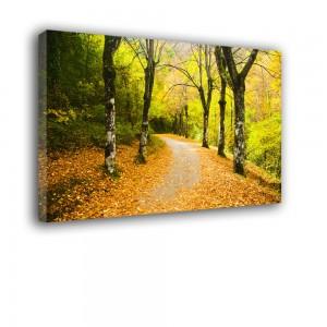 Leśną drogą nr 2070