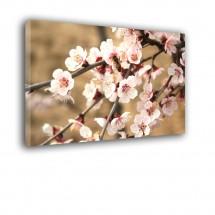 Obraz kwitnąca wiśnia nr 2084