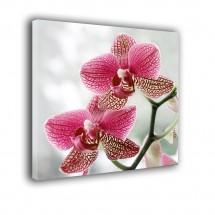 Orchidea nr 2043