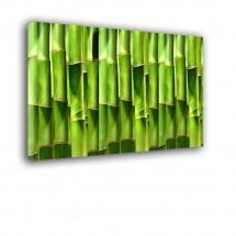 Bambusy nr 2159