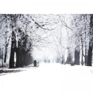 Zimowy park