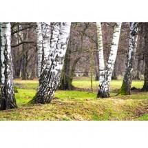 Fototapeta z drzewami