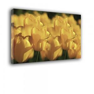 Tulipany nr 2205