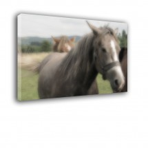Konie nr 2234
