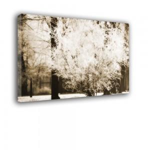 Krzewy nr 2279