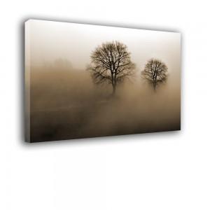 Drzewa nr 2284