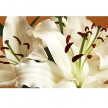 Kwiat_Lilie