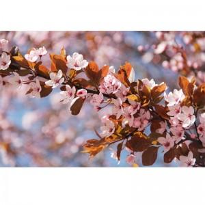 Wiosna III