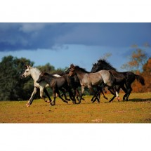 Tabun koni