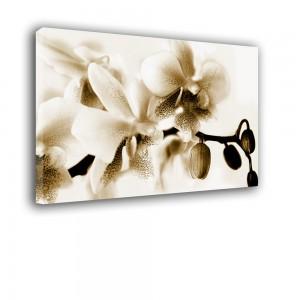 Obraz orchidea w sepii nr 2402
