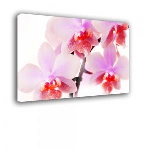 Orchidea nr 2403