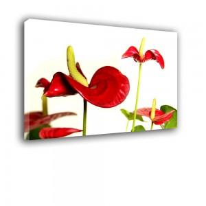 Czerwony kwiat nr 2413