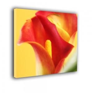 Kwiatek nr 2428