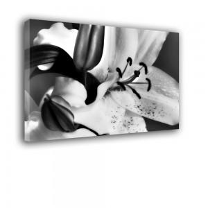 Obraz Lilia czarno biały nr 2434