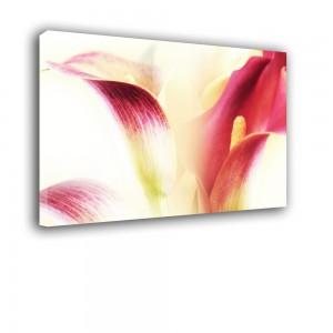 Kwiaty nr 2436