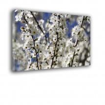 Obraz białe jabłonie nr 2466