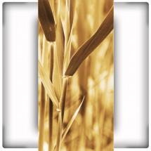 Łąka traw