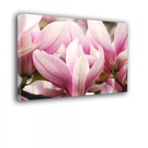 Magnoliowy róż nr 2472