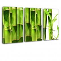 Ozdoba ściany w formie obrazu - tryptyk Bambusy nr 2633