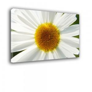 Biały kwiat nr 2304