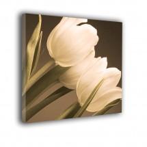 Tulipany nr 2387