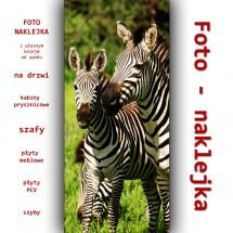 Foto - zebra