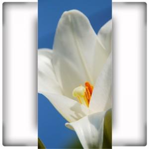 Fototapeta kwiat na wąską ścianę