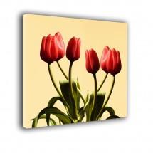 Tulipany nr 2533