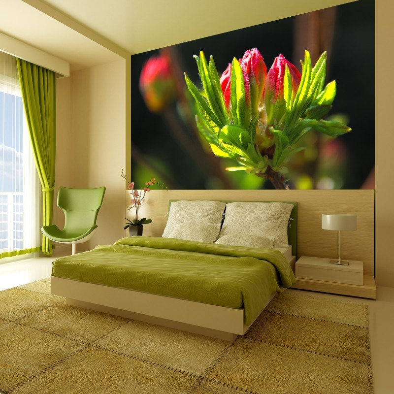 fototapeta czerwony p k kwiatu. Black Bedroom Furniture Sets. Home Design Ideas