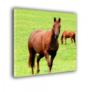 Konie nr 2546