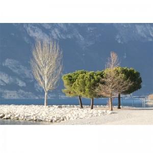 Fototapeta drzewa - kamienie